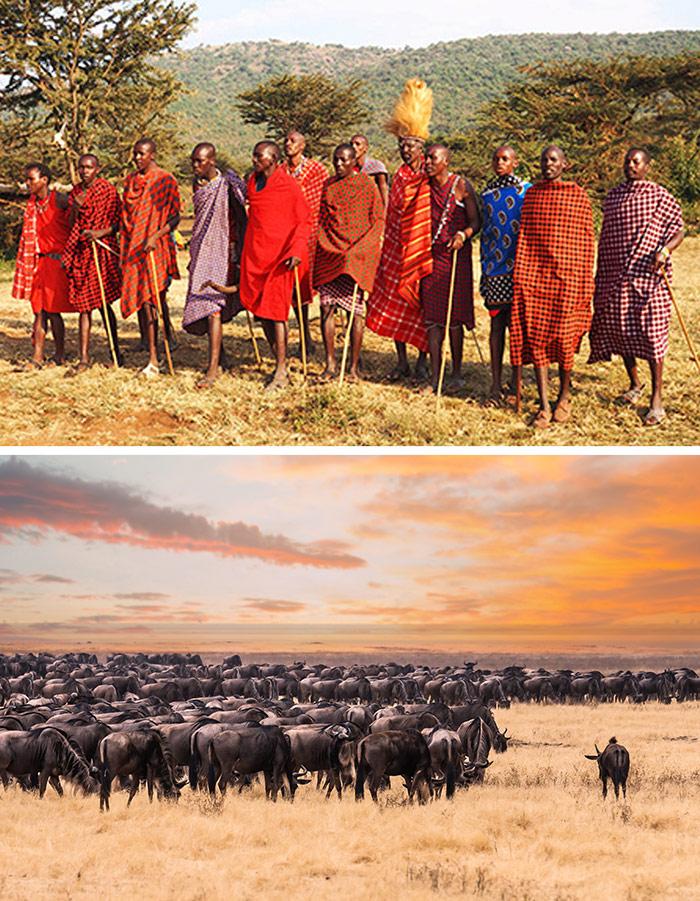 馬賽馬拉國家公園 / 馬賽村 / 動物大遷徙