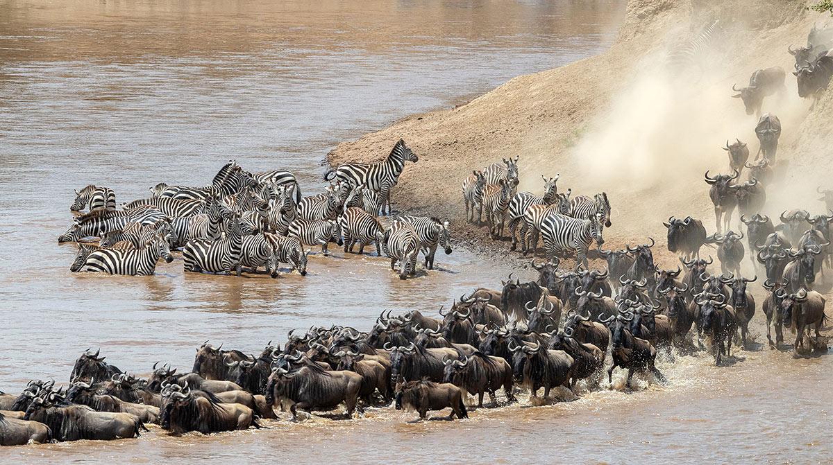 馬塞馬拉國家公園