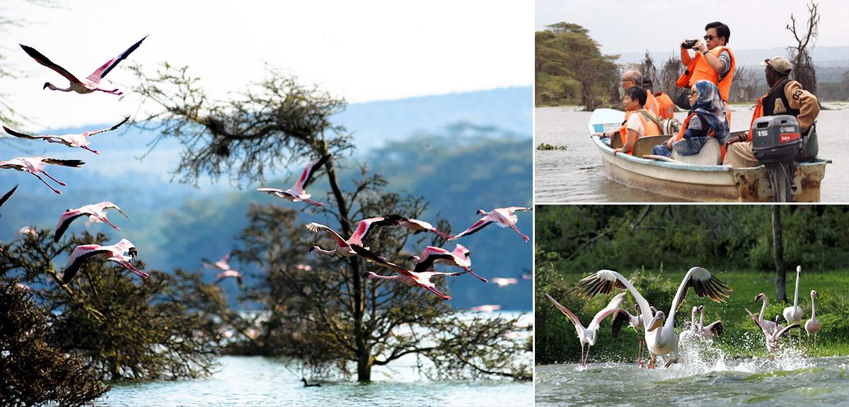 東非納瓦夏湖國家公園 / 納瓦夏湖遊船 / 紅鶴白鵜鶘