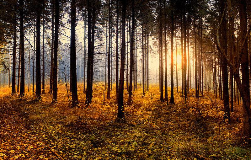 別洛韋日森林