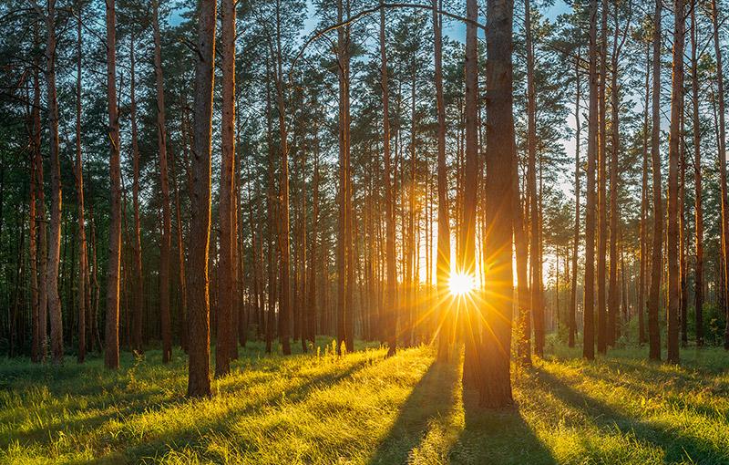 別洛韋日國家森林公園
